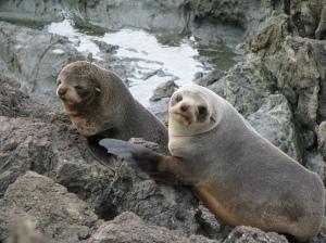 Seals C Palliser Oct 09