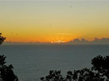 Petrels swooping around in the golden sunset.