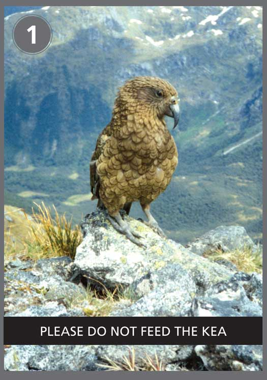 Kea poster one.