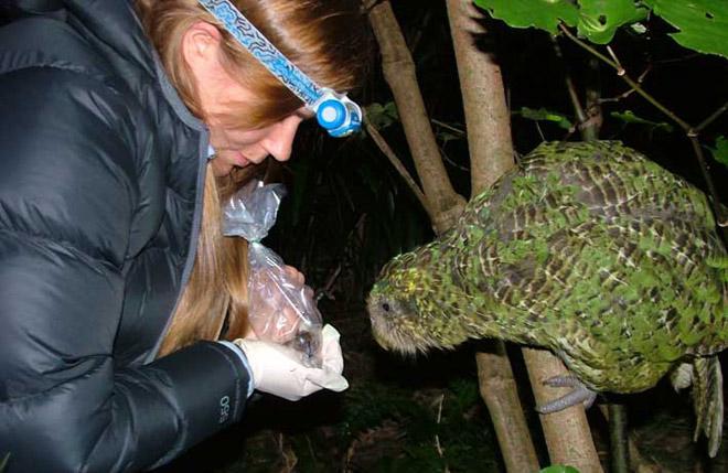 Blog: Sirocco supervises Maud Island frog monitoring