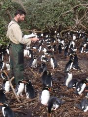 Counting Snares penguins