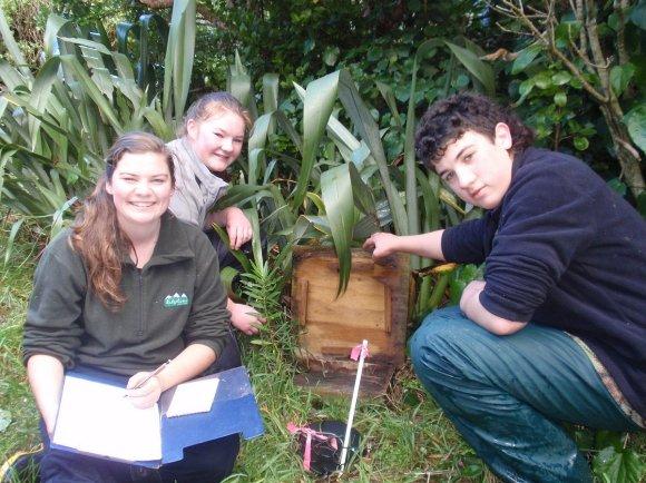 Checking chatham petrel burrow