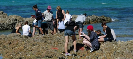 Students investigating the rocky shore on Tiritiri Matangi.
