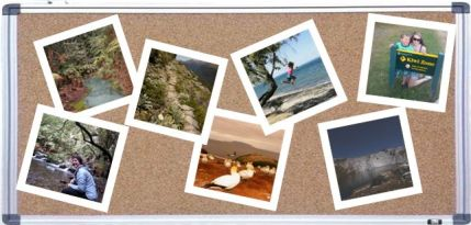 A corkboard with the other photos, in polaroid format, that made it in to the top ten.