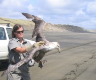 Thelma Wilson holding a giant petrel.