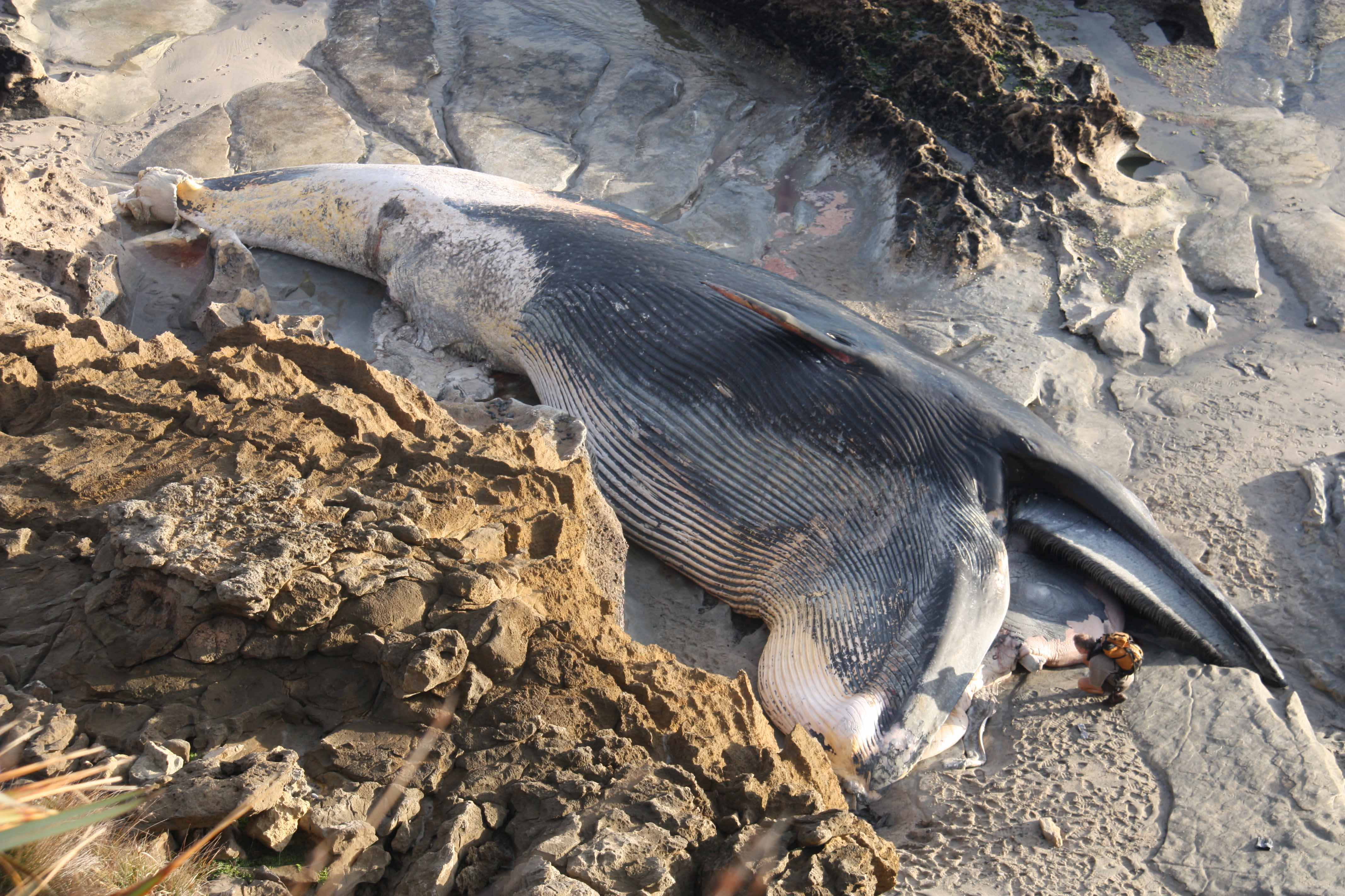 Tahuna Beach « Conservation blog
