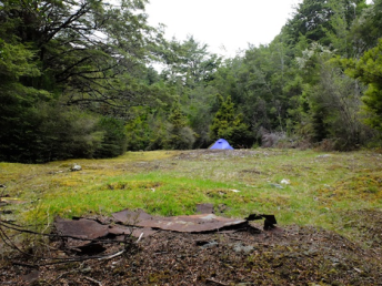 Tent across the clearing at an old gold mining campsite. Photo taken by Grant Jacobs.