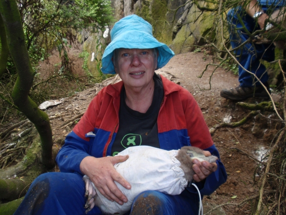 Volunteer Monika Fry with penguin chick ready for weighing