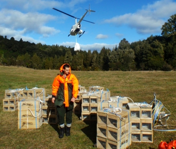 Tim Allerby with stoat traps flown in by helicopter for the upper Tauranga river.