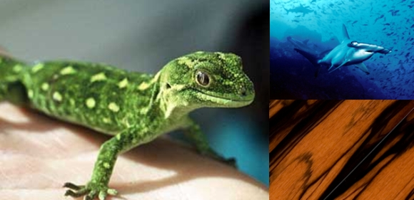 A green gecko, hammerhead shark and Madagascar ebony.