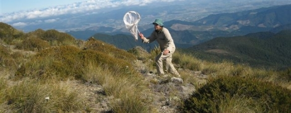 Ranger Ivan Rogers taking invertebrate samples on the Richmond Ranges.