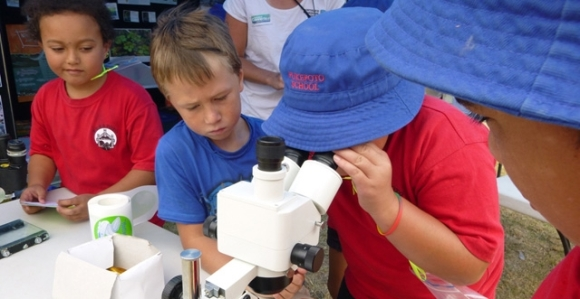 Students checking out a fish under the microscope.
