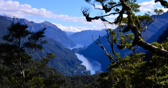 A view of Doubtful Sound from up high.