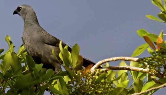Duncan sitting in his favourite Jacaranda tree.
