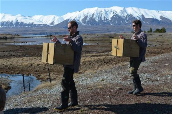 Rangers holding kaki boxes ready for release.