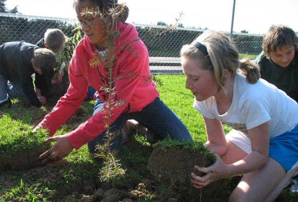 Planting of trees. Image courtesy of Sandra Burles, DOC.