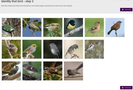 NZ Birds Online bird identifier tool.