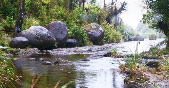 A stream in the Kaimais. Photo: Dennis Kuhn/flickr (cc)