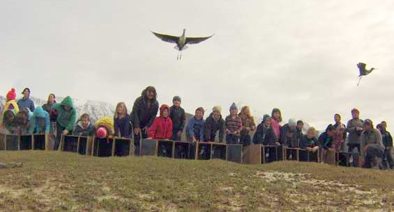 School students releasing kakī into the wild.