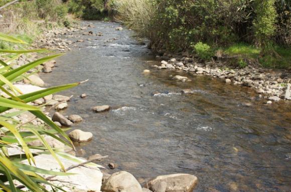 The Kaniwhaniwha Stream.