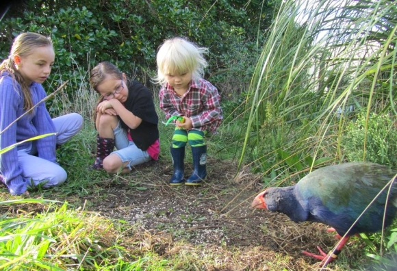 Three children coming face to face with a takahē on Mana Island.