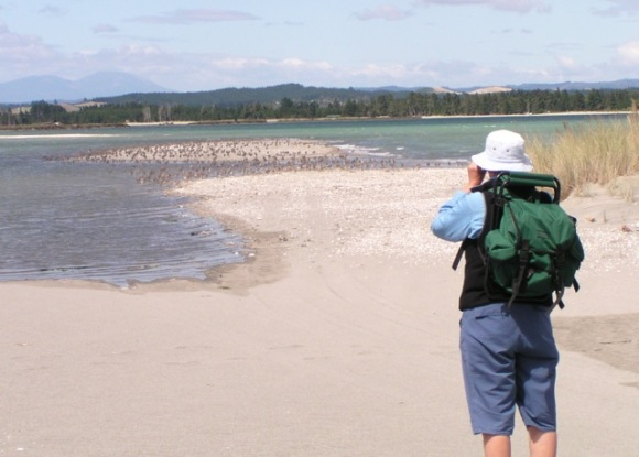 Pauline observing the godwits on the Motueka sandspit.