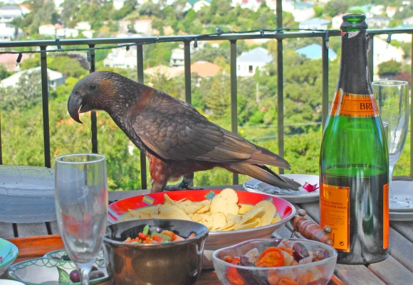Kaka in Wellington City on a balcony.