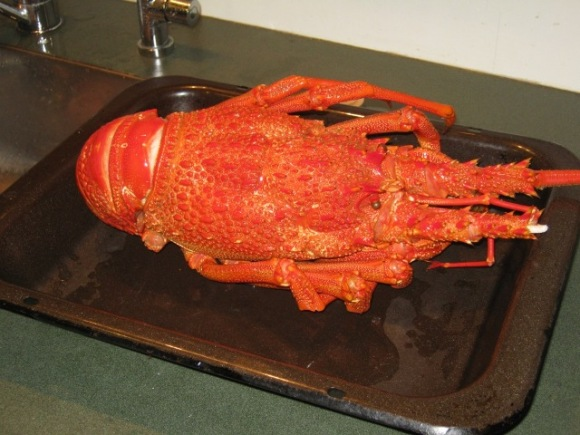A massive crayfish sitting on a roasting dish.