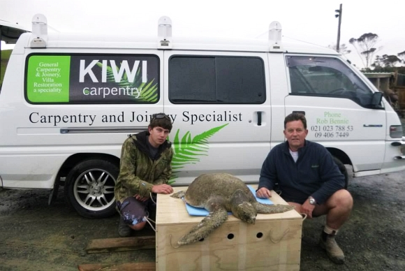 Rob Bennie of Kiwi Carpentry with a large olive ridley turtle.