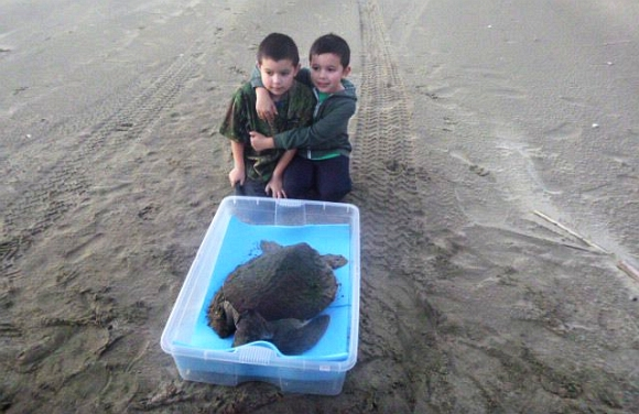 Turtle and two tamariki/children on the beach.