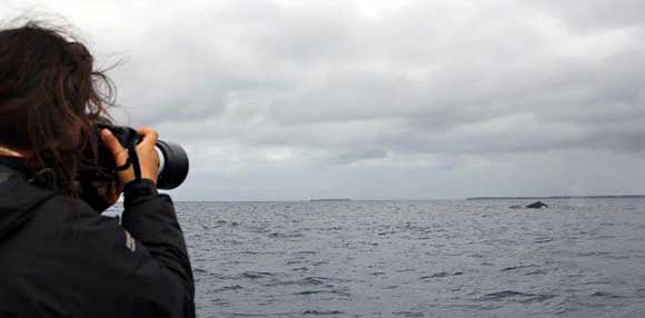 Photographing humpback whales off Mpunguti Marine Reserve, Kenya.