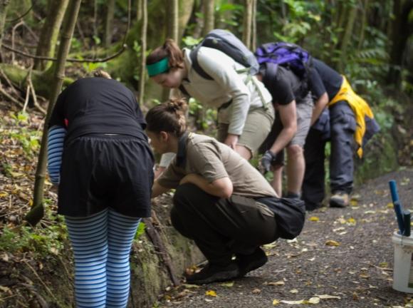 Interns working with a DOC ranger on Kapiti Island.