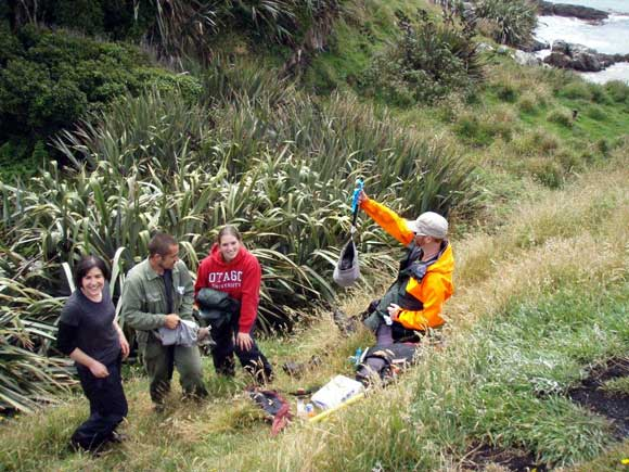 Aviva Stein (Zoologist), Leith Thomson (Yellow-eyed Penguin Trust Ranger), Eiren Sweetman (DOC volunteer) and Guy Brannigan (DOC Trainee Ranger), weighing yellow-eyed penguin chicks in the Catlins.