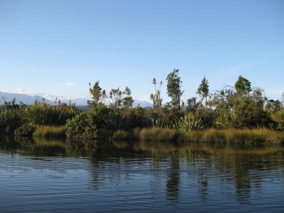 lizzy-sutcliffe-okarito-vegetation