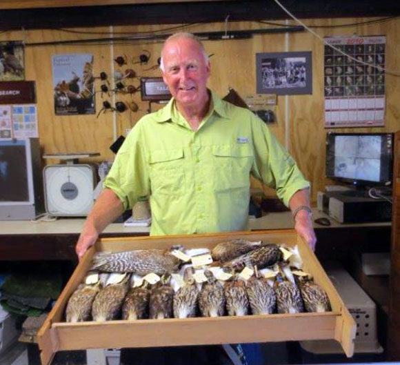 Noel Hyde with a collection of NZ falcon study skins.