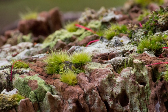 Subantarctic plantlife. Photo: Su Yin Khoo | CC BY-NC-SA 2.0.