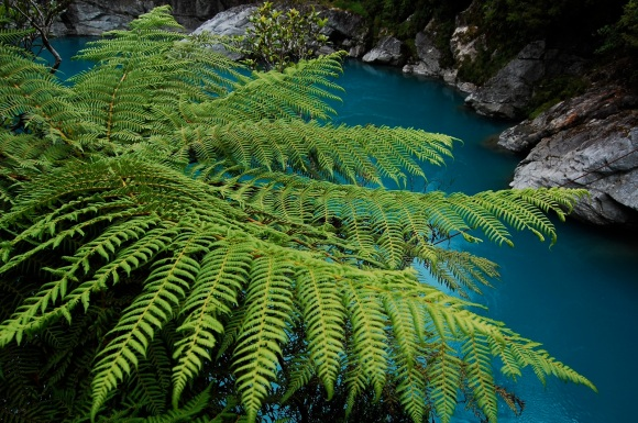 Native fern growing by blue pools. Photo by Daniel Pietzsch | CC BY-NC 2.0.
