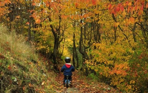 Shannon riding amongst the golden trees near Wanaka.