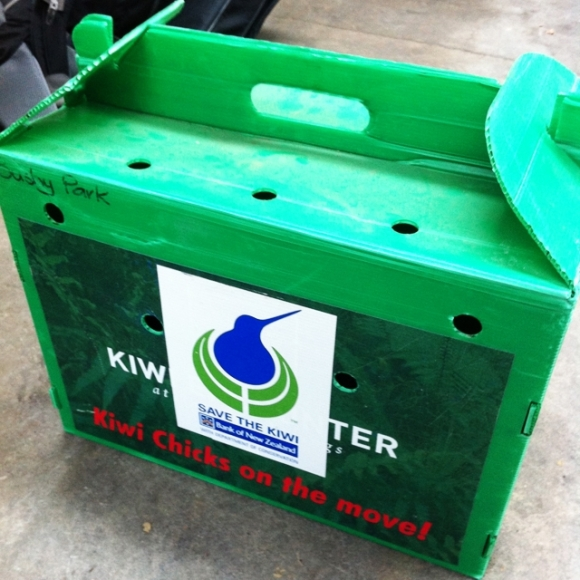 A green transport box for the injured kiwi.