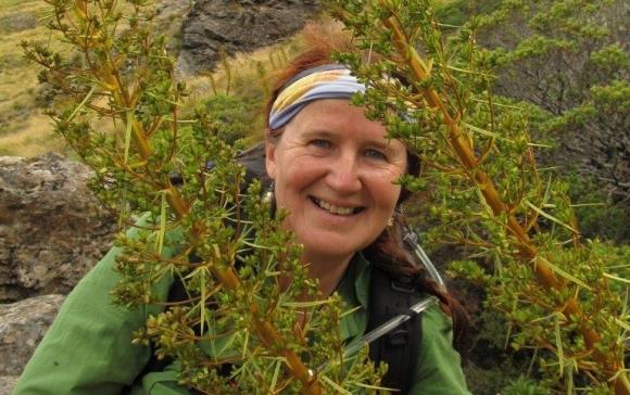 Maria amongst the speargrass flowers on Mt Peel.
