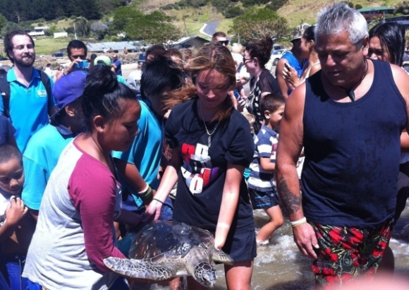 Locals returning a green turtle to the sea at Ahipara.