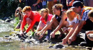 Releasing whio onto the Tongariro River in March 2014
