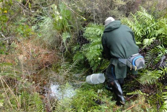 Range Myles setting a mudfish trap. Photo: Mirella Pomeroy.