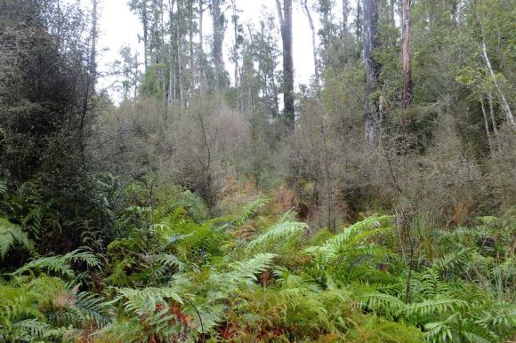 Saltwater Forest, South Westland. Photo: Mirabella Pomeroy.
