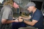 Tagging a whio for release in Taranaki