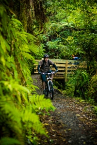 Biking the Pakihi