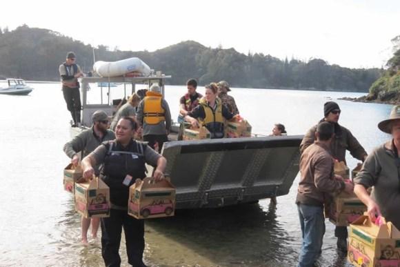 Robins being unloaded on Moturua Island. Photo: Richard Robbins/Sally Wells.