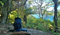Pack sitting in bush. Photo courtesy: Outward Bound.