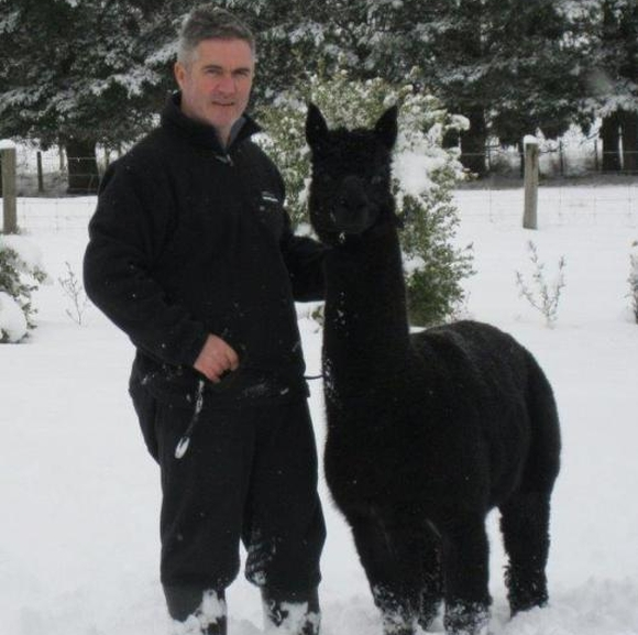 Andrew in the snow with a black alpaca.