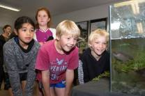 Tania Giles (9), Erin Dempster (10), Jamie Baguley (10) and Logan Woodworth (9) all from Kaurihohore School at the Living Water Hikurangi Open Day.